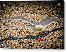 The Takeoff Acrylic Print by Loriental Photography