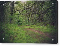 Acrylic Print featuring the photograph The Taking Tree by Shane Holsclaw