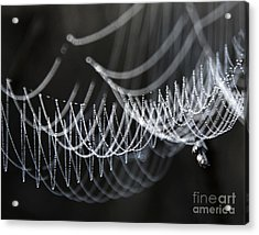 The Tangled Webs We Weave Acrylic Print by Jan Piller