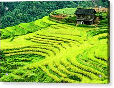 The Terraced Fields Scenery In Autumn Acrylic Print