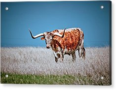 Acrylic Print featuring the photograph The Texas Longhorn by Linda Unger
