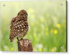 The Thinker -  Little Owl In A Flower Bed Acrylic Print by Roeselien Raimond