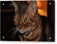 The Thinking Cat Acrylic Print by Jonathan Galente