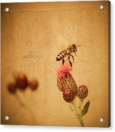 The Thistle And The Bee Acrylic Print