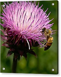The Thistle And The Stinger Acrylic Print by Ron Plasencia