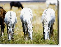 The Three Amigos Grazing Acrylic Print