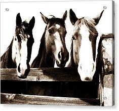 The Three Amigos In Sepia Acrylic Print