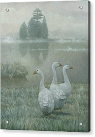 The Three Geese Acrylic Print by Steve Mitchell