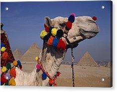 The Three Great Pyramids Of Giza Acrylic Print by Stephen St. John