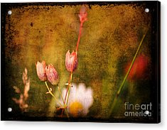 The Three Of Us Acrylic Print by Silvia Ganora