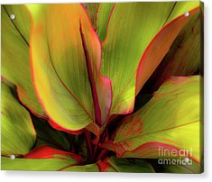 Acrylic Print featuring the photograph The Ti Leaf Plant In Hawaii by D Davila