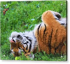 The Tiger And The Butterfly Acrylic Print