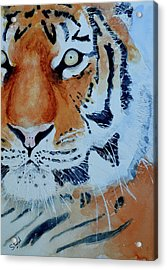 Acrylic Print featuring the painting The Tiger by Steven Ponsford