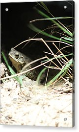 The Toad Acrylic Print