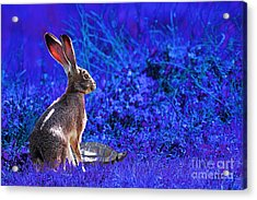 The Tortoise And The Hare . Blue Acrylic Print by Wingsdomain Art and Photography