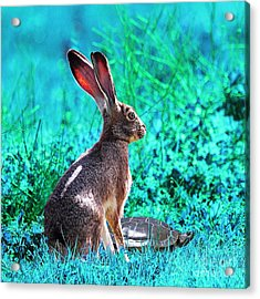The Tortoise And The Hare . Cyan Square Acrylic Print by Wingsdomain Art and Photography