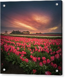 Acrylic Print featuring the photograph The Tranquil Morning Before Sunrise by William Lee