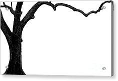 The Tree Acrylic Print by Amanda Barcon