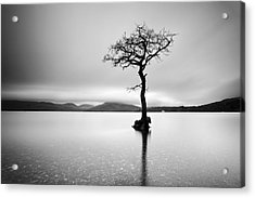The Tree Acrylic Print by Grant Glendinning