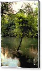 The Tree Island Acrylic Print by Ken Gimmi