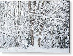 The Tree- Acrylic Print