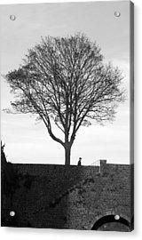 The Tree Acrylic Print by Jez C Self