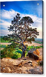 The Tree Acrylic Print by Keith Homan