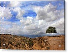 The Tree Of Wisdom Acrylic Print