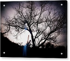 The Tree Of Wisdom Acrylic Print by Nature Macabre Photography