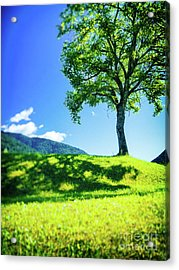 The Tree On The Hill Acrylic Print