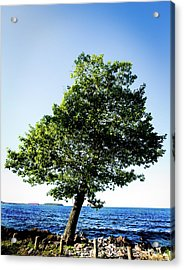 Acrylic Print featuring the photograph The Tree by Onyonet  Photo Studios