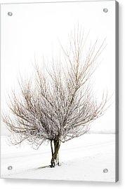 The Tree Acrylic Print by Svetlana Sewell