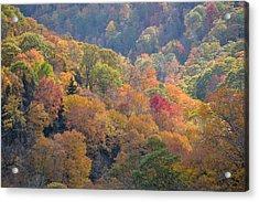 The Trees Of Autumn On The Blue Ridge Acrylic Print