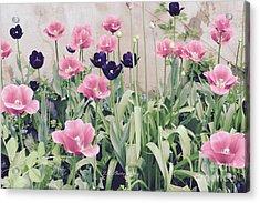 The Tulip Garden Acrylic Print by Jeannie Rhode