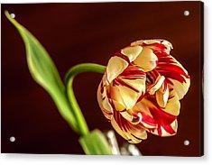 The Tulip's Bow Acrylic Print