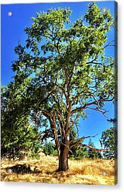 Acrylic Print featuring the photograph The Turtleback Tree by Lorraine Devon Wilke