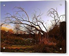 The Twilight Tree Acrylic Print by Sophia Shine