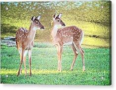 The Twins Acrylic Print by Geraldine DeBoer