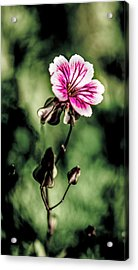Acrylic Print featuring the photograph The Unknown Weed by Onyonet  Photo Studios