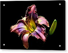 The Vibrant Lily Acrylic Print