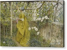 The Vine, 1884 Acrylic Print by Carl Larsson