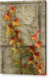 The Vine Acrylic Print