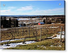 The Vineyard On Old Mission Acrylic Print