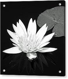 The Vintage Lily II Acrylic Print by Melanie Moraga