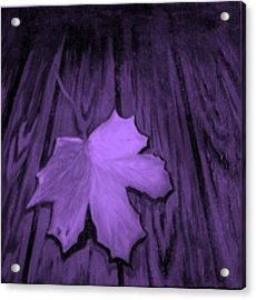 The Violet Leaf Acrylic Print by Ninna
