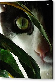 The  Voyeur Acrylic Print by Lynn Andrews