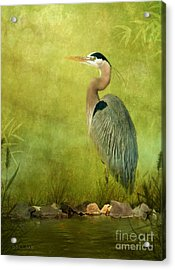The Wait Acrylic Print