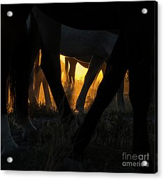 The Wandering Few Acrylic Print by Nicole Markmann Nelson