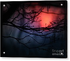 The Warm Light Acrylic Print by Angel Ciesniarska