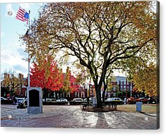 The Washington Elm Acrylic Print